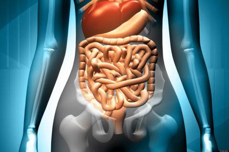Lipídios da Digestão até a Eliminação